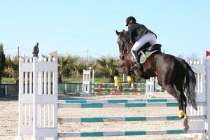 horse-1076551_640