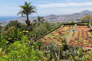 Madere jardin botanique en funchal , île de Madere
